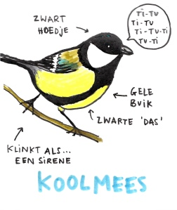 koolmees