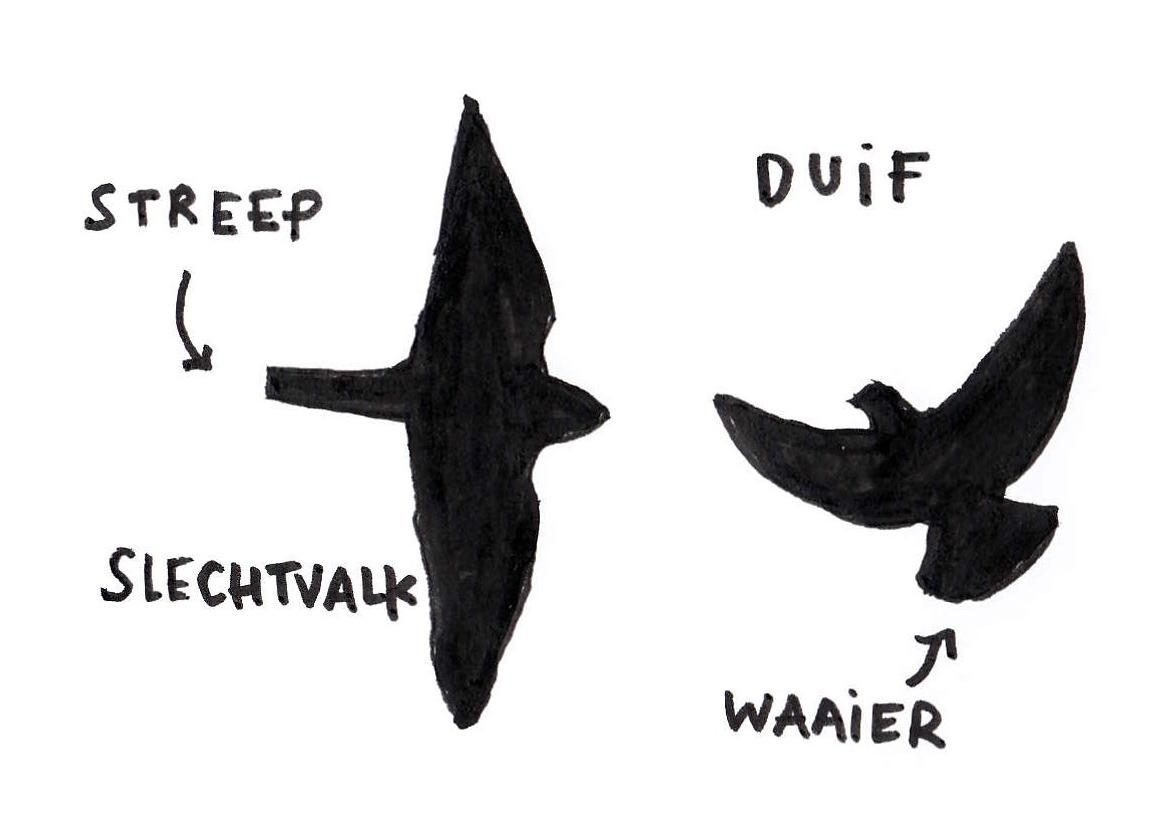 slechtvalk-duif